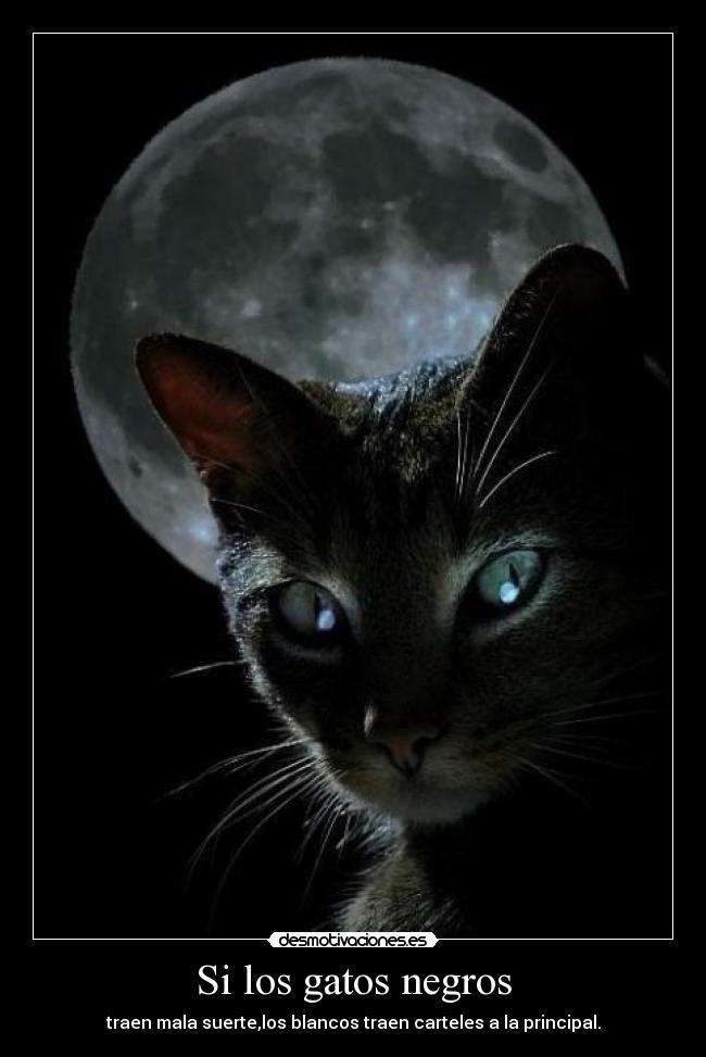 Si los gatos negros