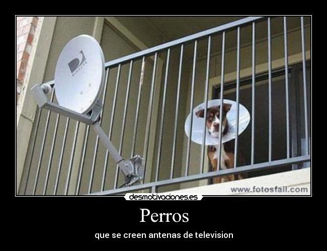 Desmotivaciones Y Humor negro 190081_10150132947932958_825637957_6537037_7597225_n