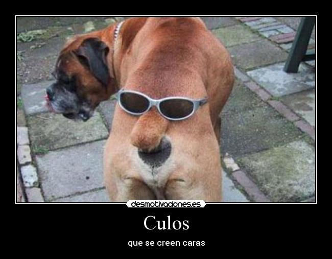 Fotos graciosas, animales - Humor - Taringa!