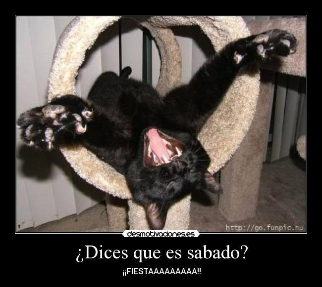 carteles gato desmotivaciones