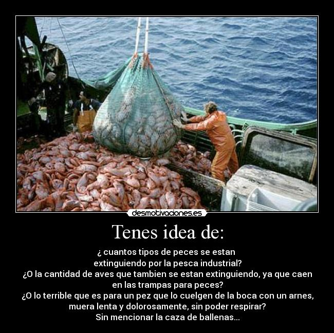 carteles peces pesca industrial terrible desmotivaciones