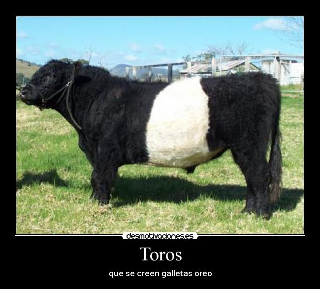 Toros - que se creen galletas oreo