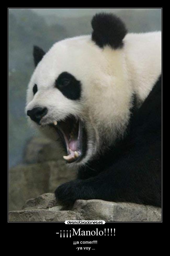 Panda meme how about no - photo#21