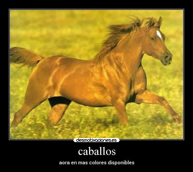 carteles caballo colores roro tonteria desmotivaciones
