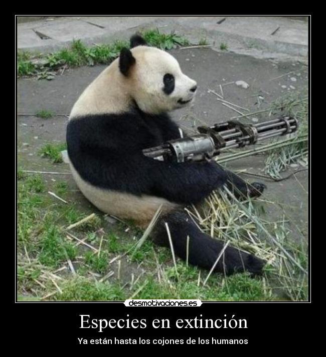 Malditos humanos prácticamente nos han extinguido. Rinoceronte Blanco del Norte. Dbd60930af97a0995f0c8921a8af6b11