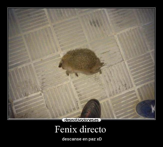 Fenix directo desmotivaciones for Oficina fenix directo