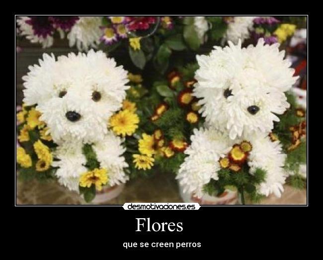 carteles flores perros desmotivaciones