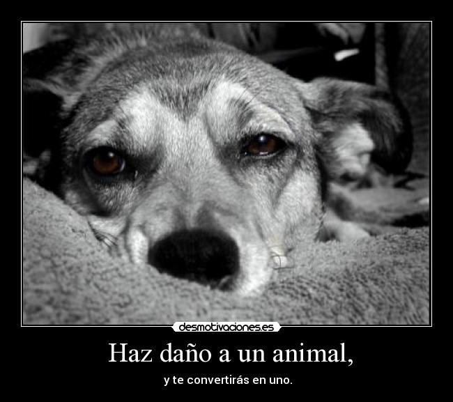 Frase Sobre Los Animales Imagui