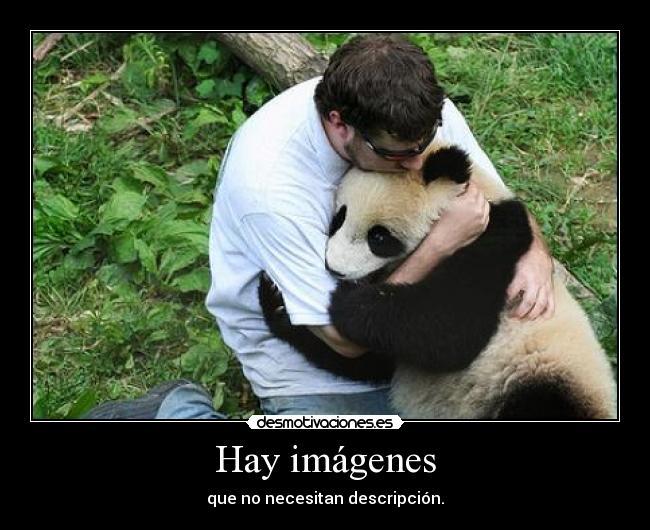 carteles hay imagenes fotos que no necesitan descripcion oso panda animal amigos siempre xd desmotivaciones
