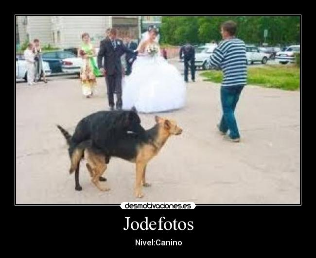 Jodefotos - Nivel:Canino