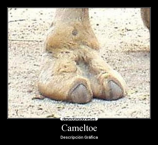 Categoria: cameltoe - desmotivaciones.