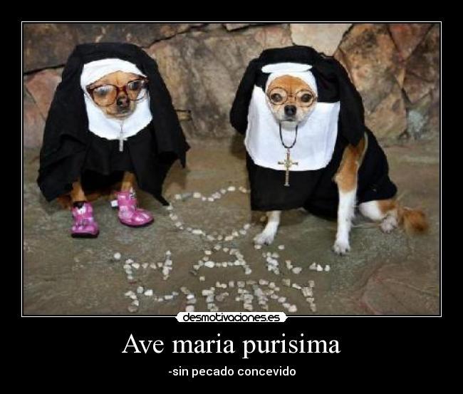 perros_disfrazados_de_monjas12092 ave maria purisima desmotivaciones