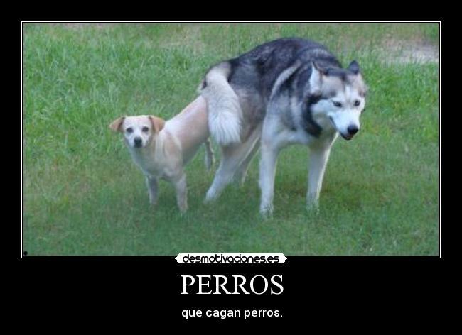 carteles perros que cagan perros desmotivaciones