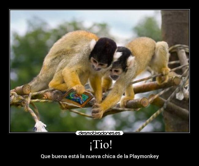 Playmonkey