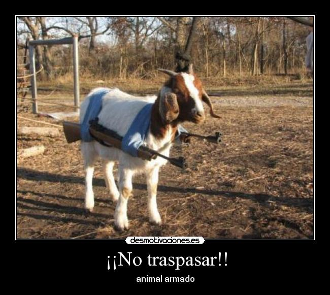 ¡¡No traspasar!! - animal armado