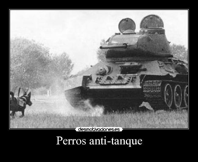 Perros anti-tanque -
