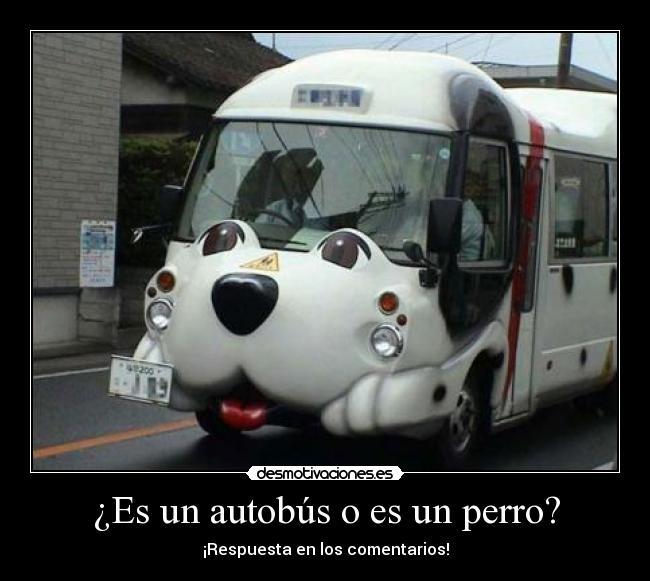 ¿Es un autobús o es un perro? - ¡Respuesta en los comentarios!