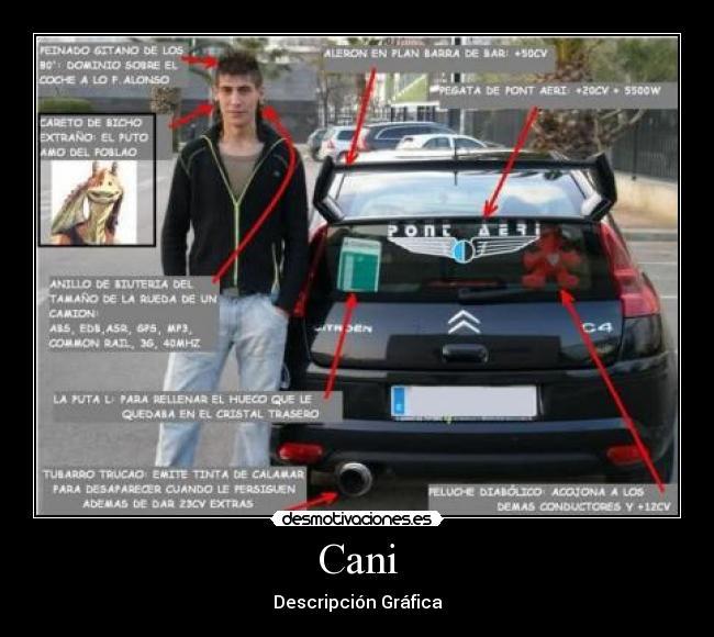 Cani desmotivaciones for Pegatinas para coches