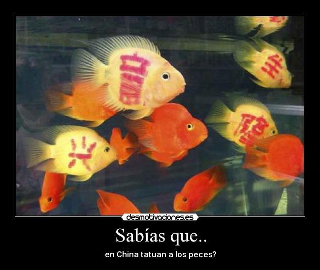 Im genes y carteles de peces pag 9 desmotivaciones for Imagenes de peces chinos