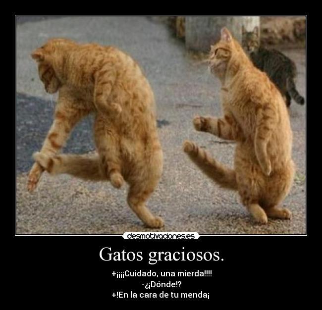 gato graciosos:
