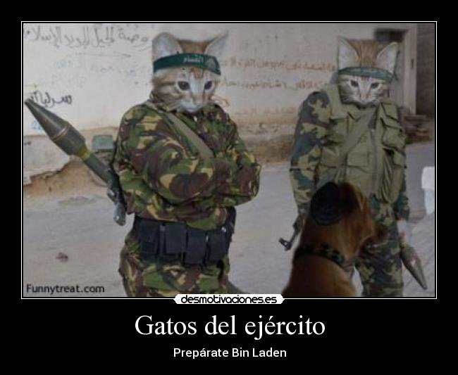 Gatos del ejército - Prepárate Bin Laden