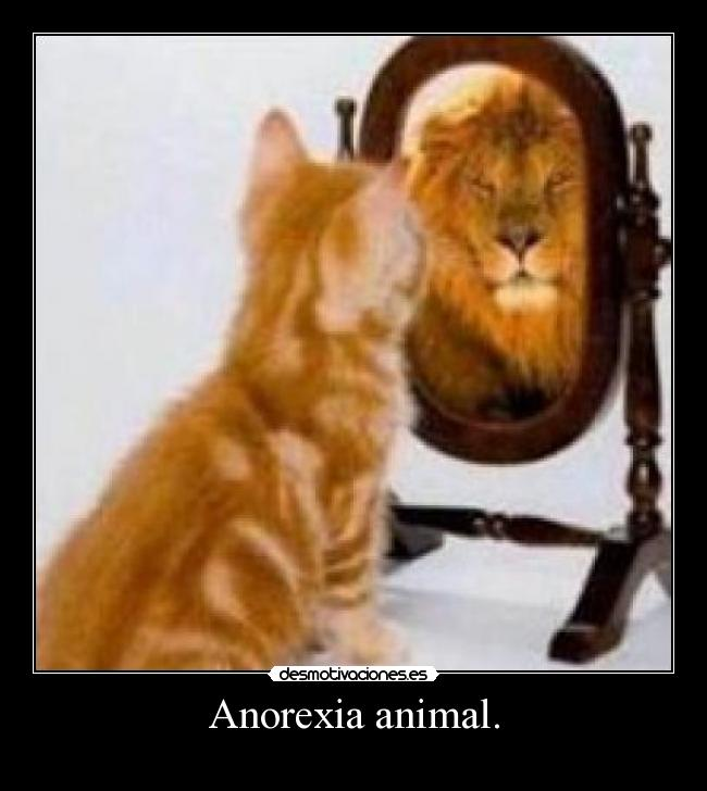 Anorexia animal. -