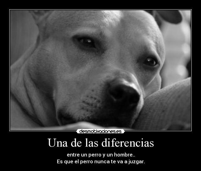 Q Es Un Bull Terrier American pitbull terri...