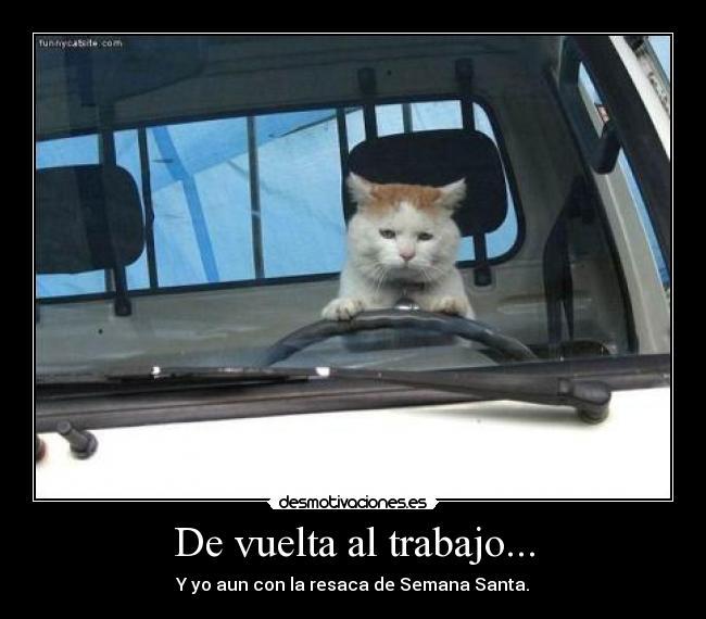 Cat Driving To Work Meme