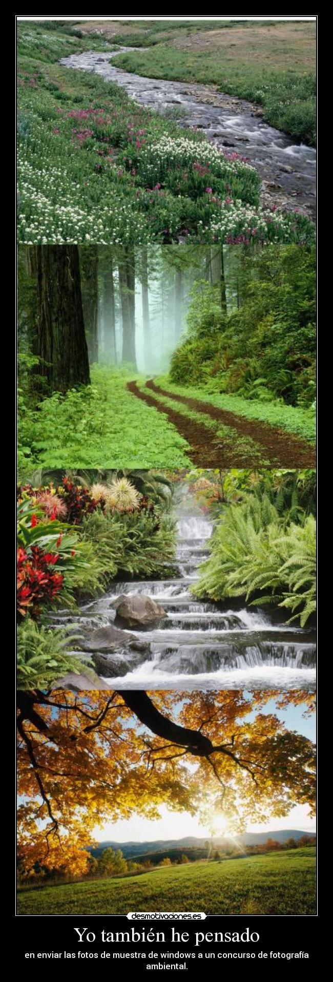 carteles fotos ambiente ambiental muestra windows desmotivaciones