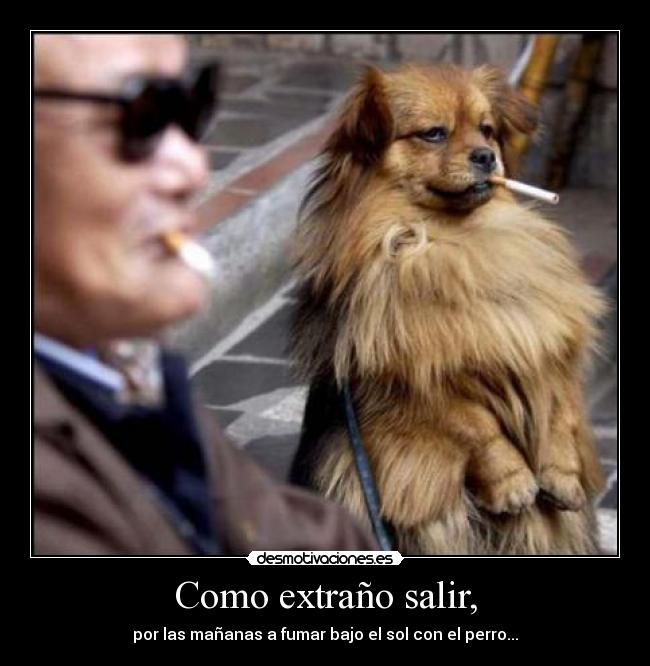 carteles smoke with dog desmotivaciones