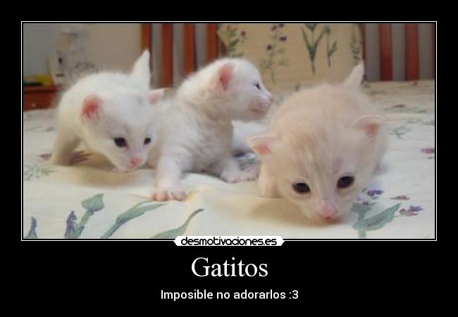 Gatitos - Imposible no adorarlos :3