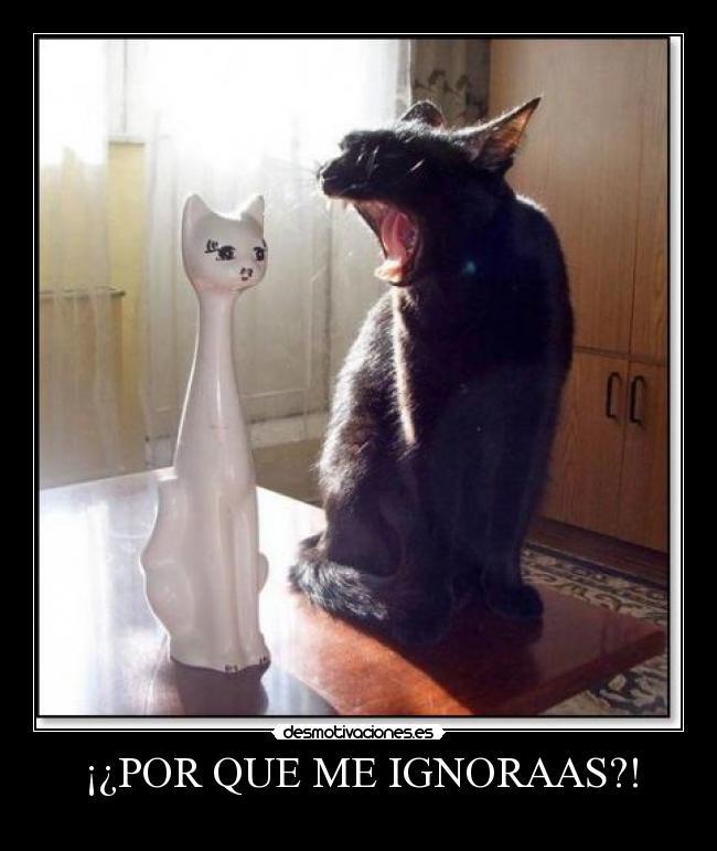 carteles figura que ignora gato desmotivaciones