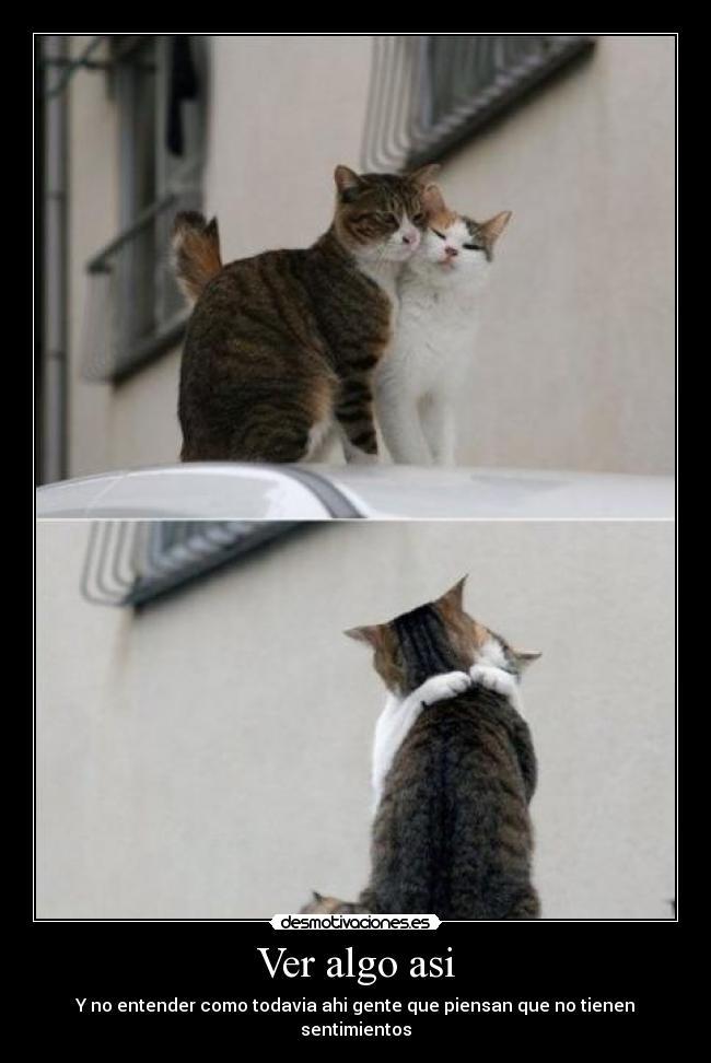 carteles animales sentimientos gatos vida alegria desmotivaciones