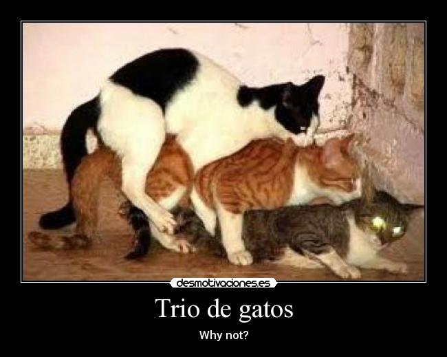 Trio de gatos - Why not?