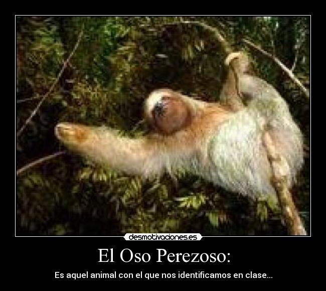 El Oso Perezoso: - desmotivaciones.es