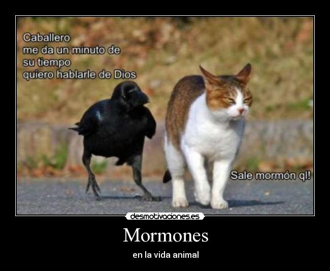 Funny Frozen Memes mormon or not mormon M...