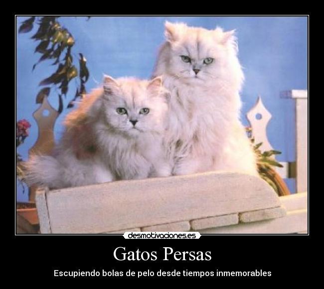 Gatos Persas Desmotivaciones