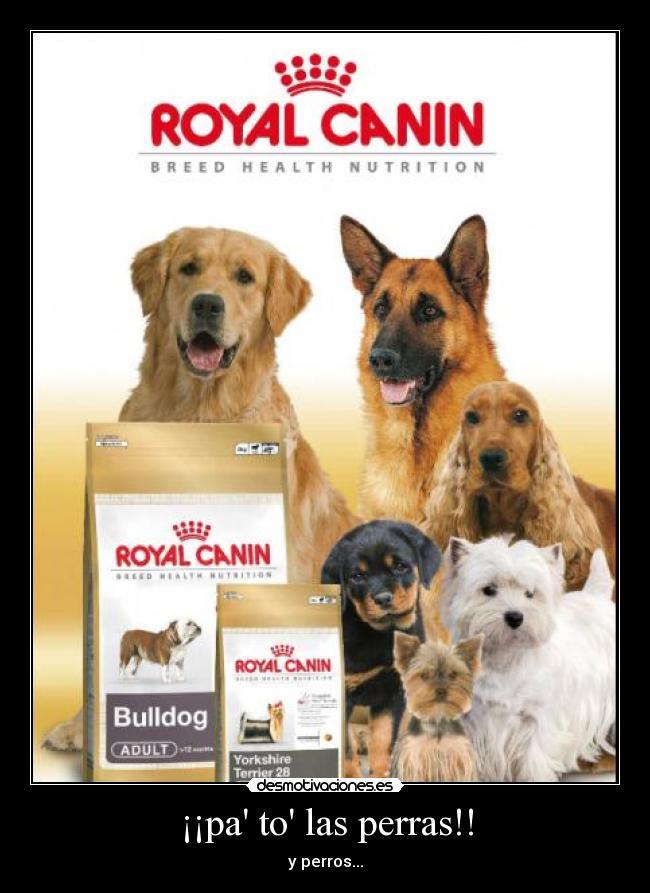 carteles perros perras desmotivaciones