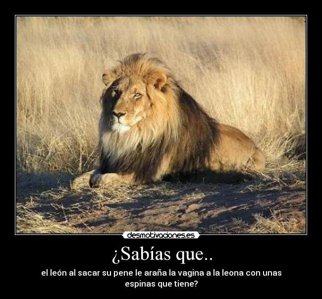 pene del leon