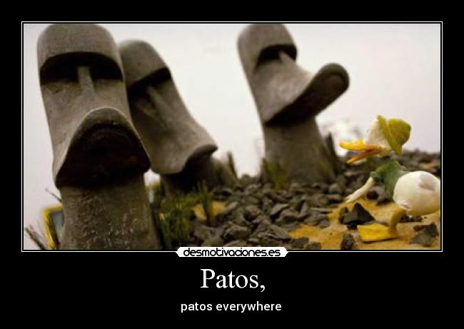 Patos, - patos everywhere