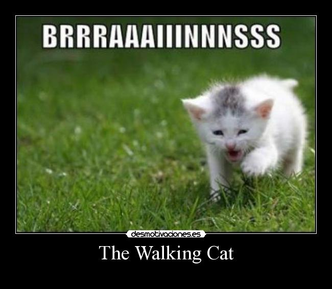 The Walking Cat -