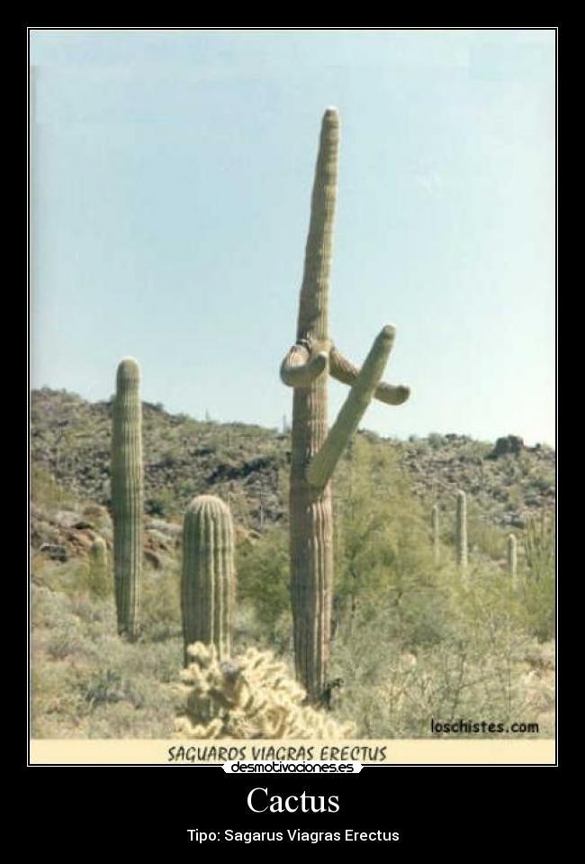 Im genes y carteles de cactus pag 2 desmotivaciones - Cactus raros fotos ...