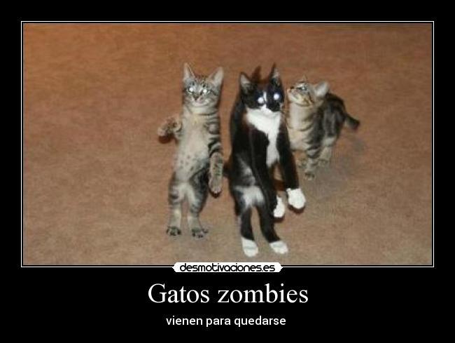 carteles gatos gatos zombies desmotivaciones