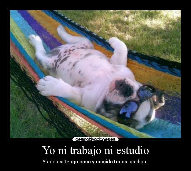 Lazydog.jpg