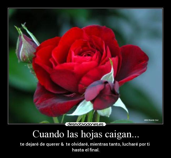 La vida es como una rosa desmotivaciones - Como secar una rosa ...