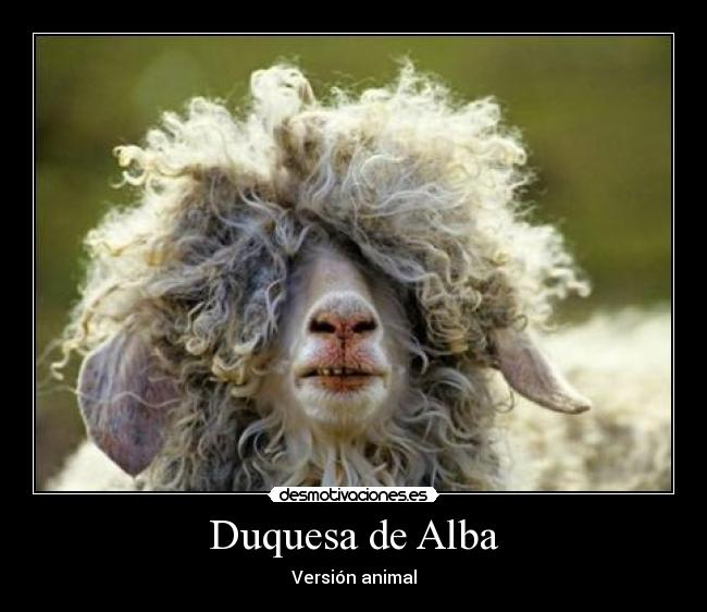 Duquesa de Alba - Versión animal