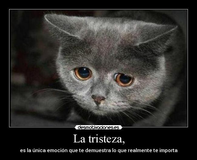 etiquetas tristeza gato triste emocion importante gatito ojos marrones ...