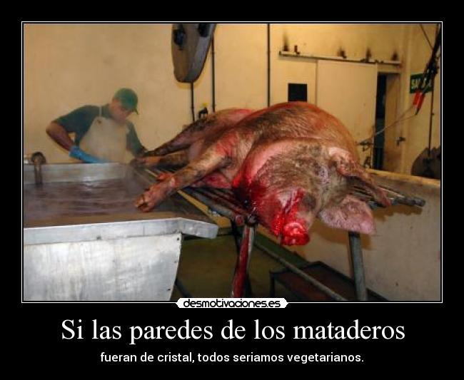 carteles las paredes los mataderos fueran cristal todos seriamos vegetarianos desmotivaciones