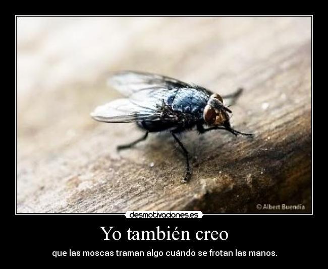 http://img.desmotivaciones.es/201105/mosca_099AB_1.jpg