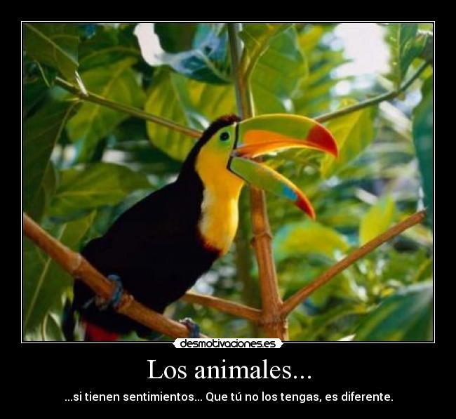 carteles animales tucan animales sentimientos desmotivaciones